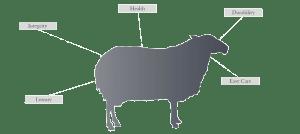 wool by cavalier carpets